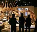 Είσοδος στο Πάρκο Δεινοσαύρων για 3 άτομα