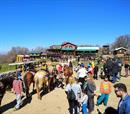 Βόλτα με άλογα, σκοποβολή & τοξοβολία για 4μελή οικογένεια!