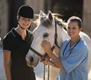 20' βόλτα με άλογα στη φύση για 2 άτομα από 9 έως 65 ετών!