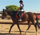 45' μάθημα ιππασίας με εκπαιδευτή για 2 άτομα στα Σπάτα!